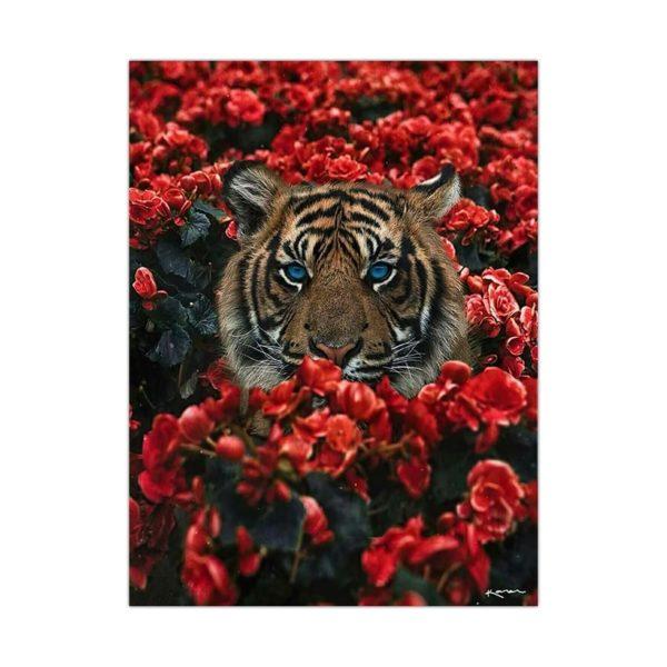 poster tigre Rose Rouge