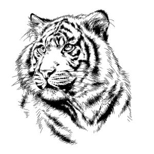 stickers tigre Picture Doux