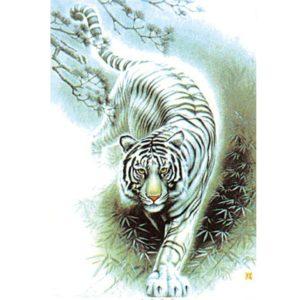 Puzzle Tigre Fauve Blanc Rayé