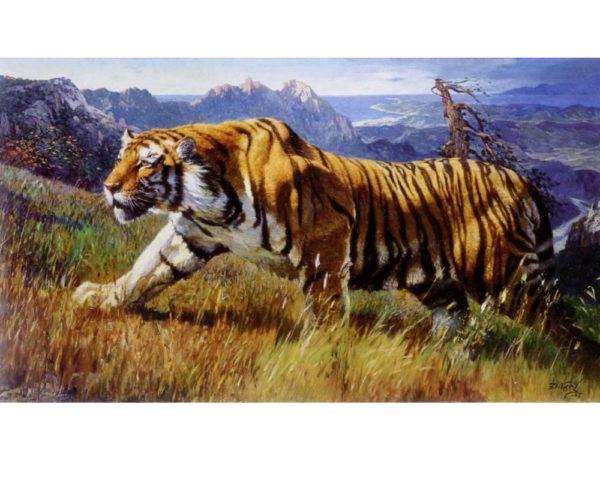 Puzzle Tigre Fauve en Prairie