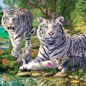 Puzzle Tigre Fauves Blancs