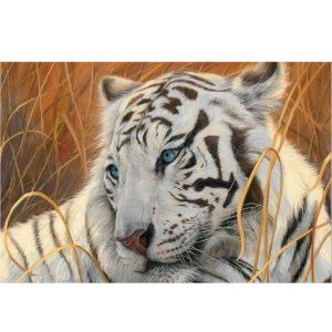 Puzzle Tigre Blanc Yeux Bleus